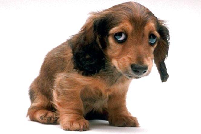 Тернополянин пропонує встановити відлякувачі собак