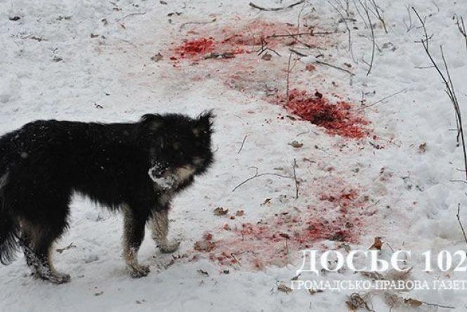 У Петрикові собаки погризли жінку. Тіло без голови знайшов її син (ОНОВЛЕНО)