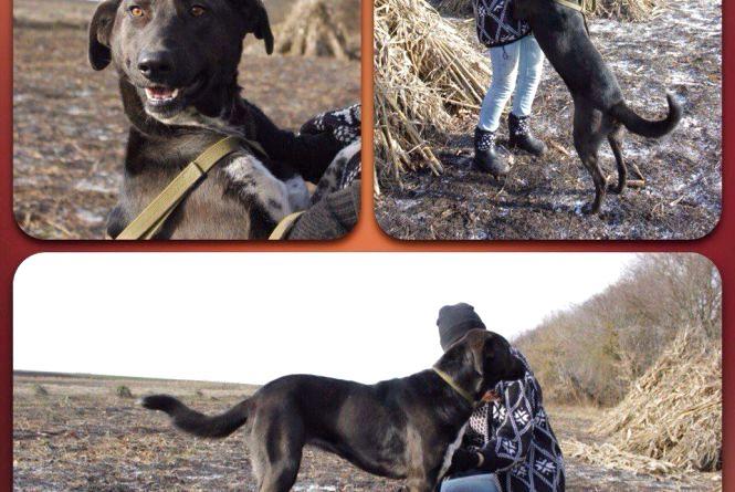 Волонтери шукають домівки для дружелюбних собак