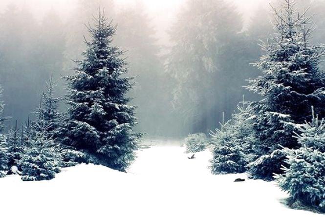 Погода на 24 січня: без опадів, -6°