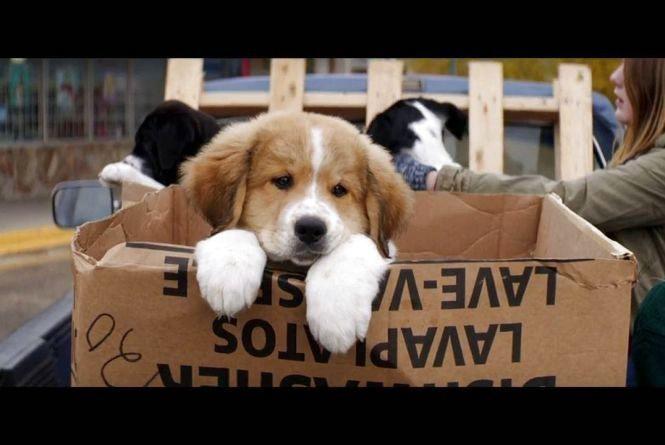"""Фільм про """"Життя і мету собаки"""" покажуть малечі і дорослим"""