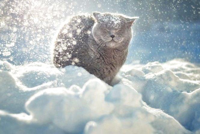 Погода на 25 січня: хмарно, -2