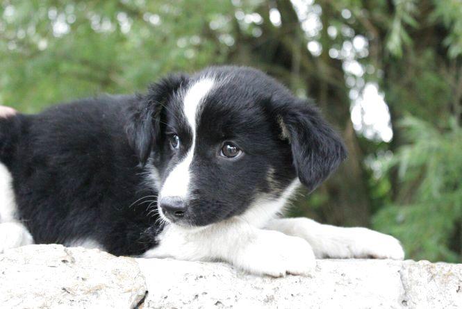 """Волонтери """"Ноєвого Ковчегу"""" просять їжу для собак"""