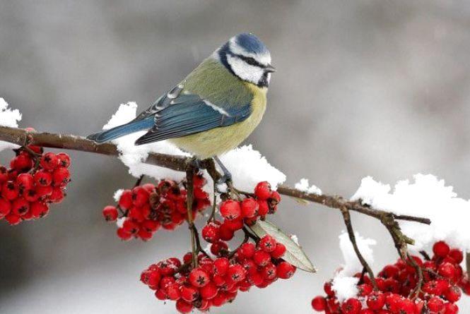 Погода на 1 лютого: хмарно, сніг і дощ, +1