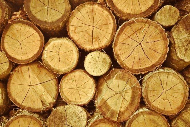 На Чортківщині у лісі зловмисник залишив 72 пеньки