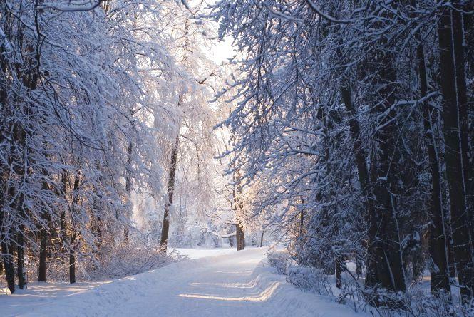 На Кременеччині розшукали підлітка, який втік з дому і сховався у лісі