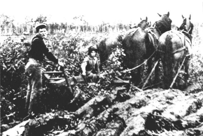 Вахтанг Кіпіані: Перші українські емігранти везли до Канади каміння
