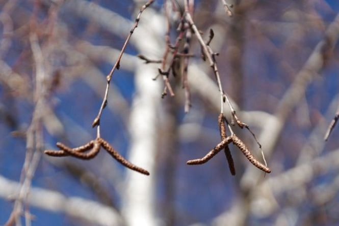 Погода у Тернополі: 23 березня, ясно, +9°