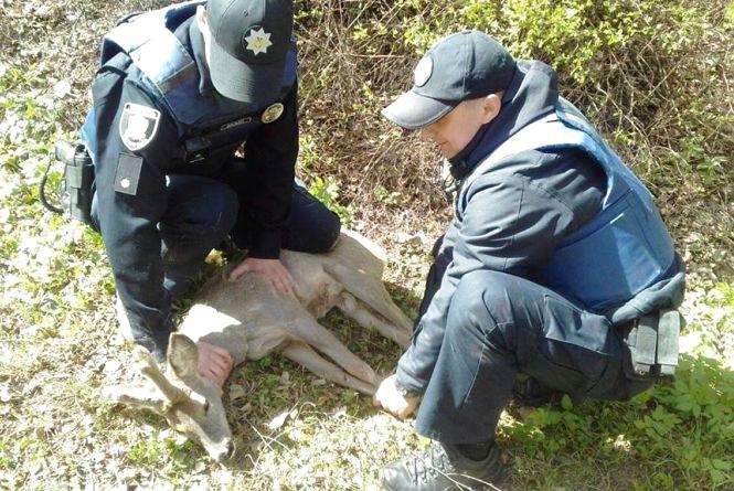 Фото дня: Копи в парку рятували косулю