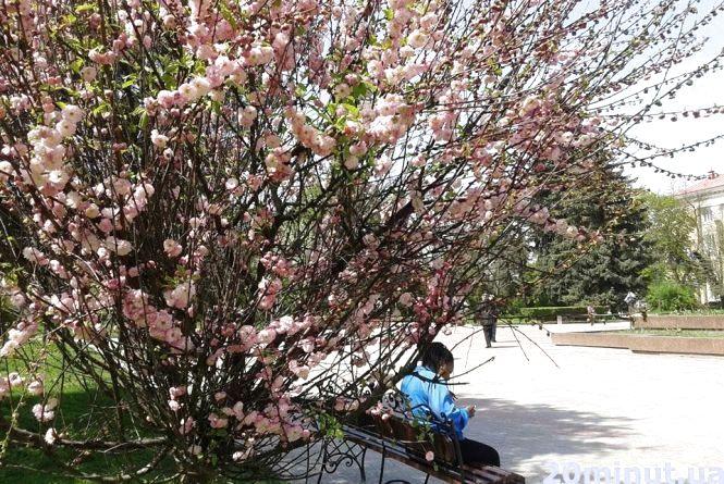 Фото дня: На Майдані Волі цвітуть сакури