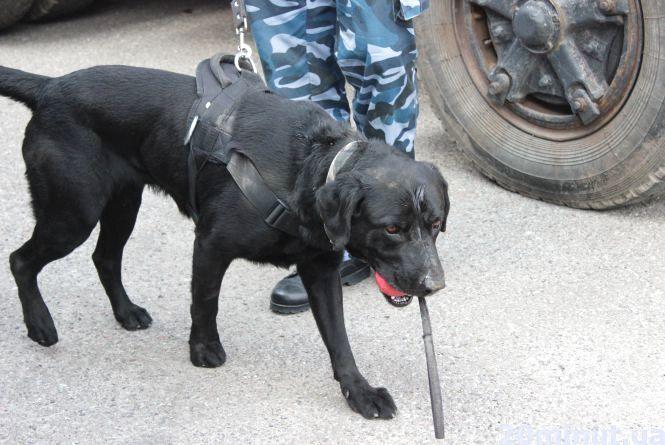 Кінологи з собаками у ТНЕУ  шукають зброю, наркотики та тютюн