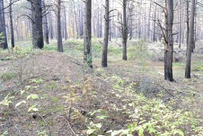 На Тернопільщині лісники нарубали дерев на півмільйона гривень