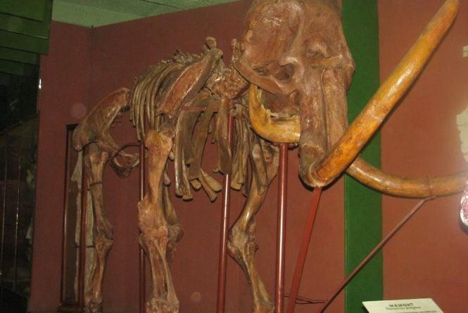 """""""Ніч у музеї"""": селфі із мамонтом, козаки і тисяча відвідувачів"""