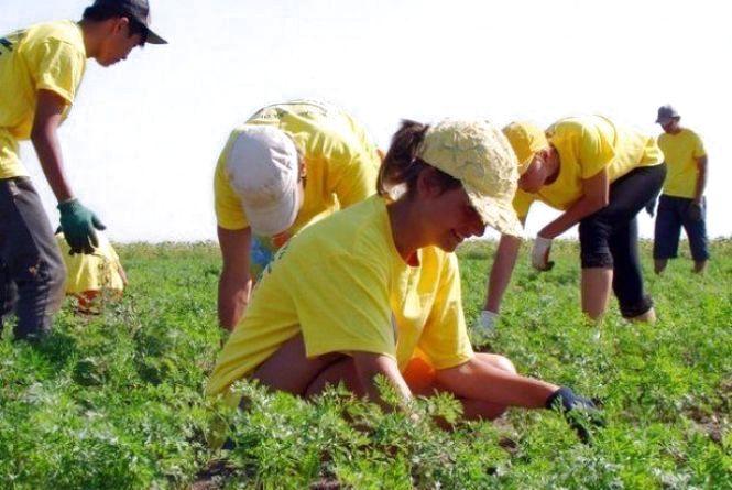 Від 12 до 50 тис. грн у місяць заробляють тернополяни на сезонних роботах у Європі