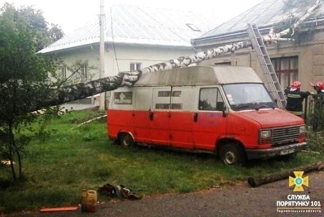 У Тернополі негода наробила біди: дерева попадали на автомобілі