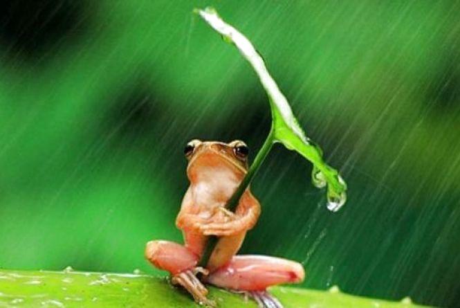Погода у Тернополі: 6 липня, дощ, +27°