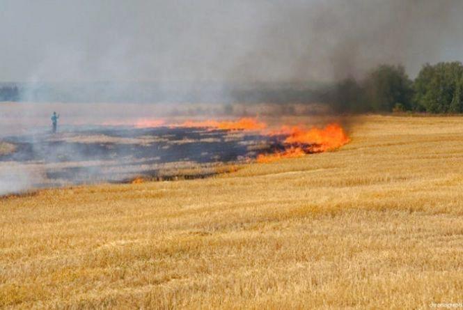 У Тернопільському районі згоріло 24 га ячменю