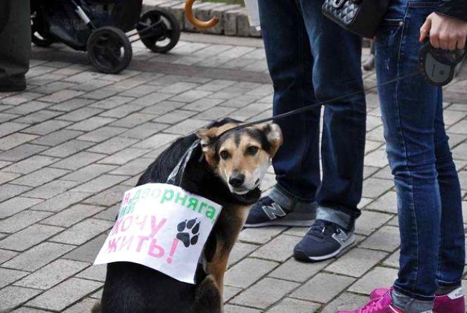 Тернополяни вийдуть на марш за права тварин