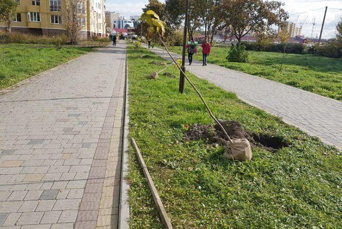 У Тернополі новий рекорд: висадили найдовшу в Україні катальпову алею