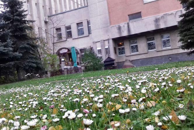 """Фото дня: біля """"Збруча"""" біло від ромашок"""