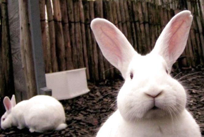 За двох кролів суд дав чоловіку три роки
