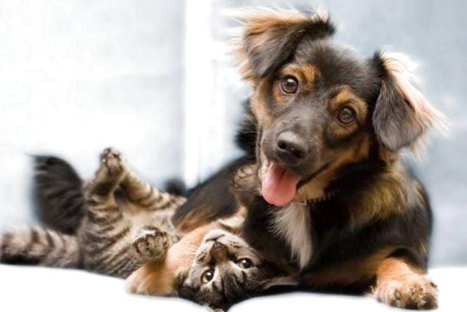 Повний хаос. Франківці обурені тарифами на ветеринарні послуги