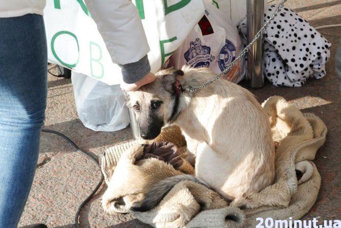 Тернополянка віддала 700 гривень на їжу для безпритульних собак