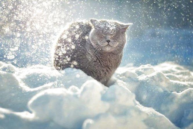 Погода у Тернополі на 10 грудня: сніг, +2°