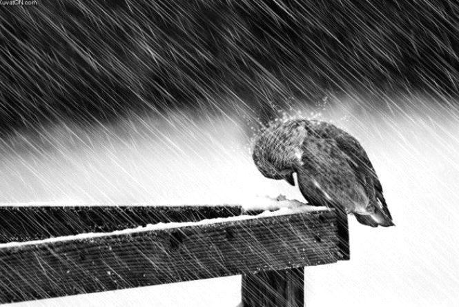 Погода в Тернополі 15 грудня: сніг, -3