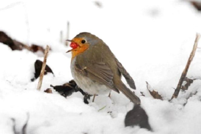 Погода у Тернополі: 23 лютого, сніг, -5°