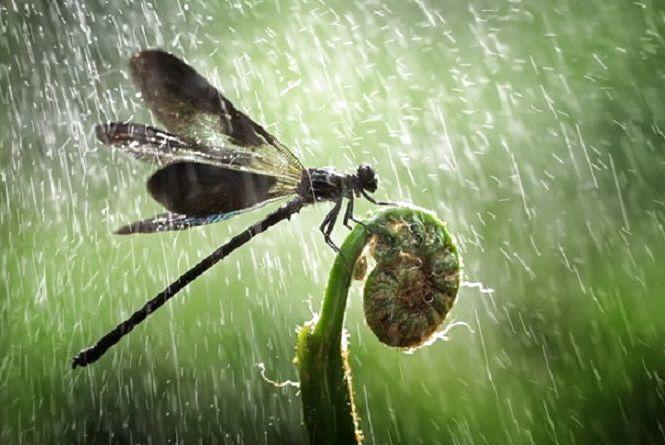 Погода у Тернополі 8 червня, +24. Не забудьте парасольки, обіцяють зливу і грози