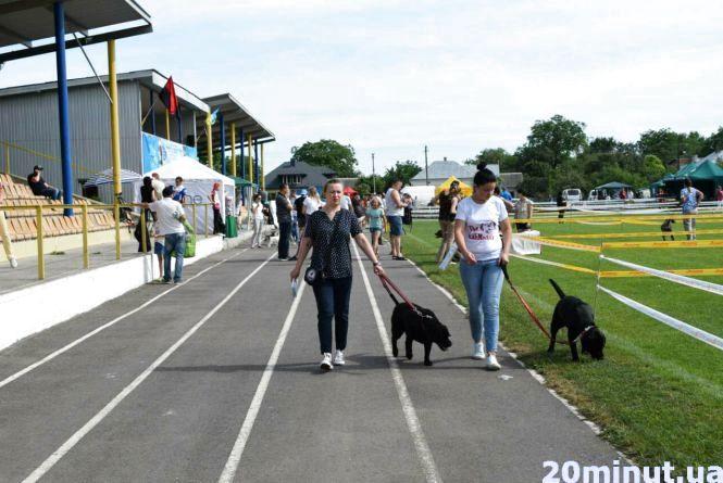 Побачити собак усіх порід можна сьогодні на виставці у Великих Гаях