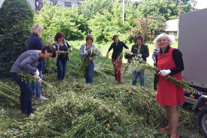 Фото дня: у Теребовлі плетуть найбільший в Україні Купальський вінок