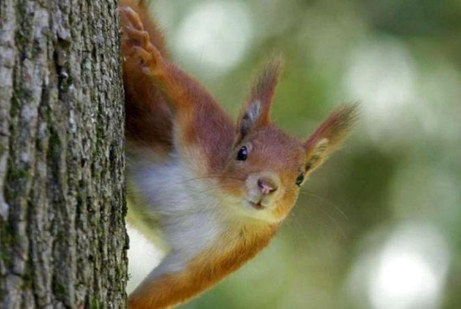 Відео дня: в парку Нацвідродження білки їдять з рук