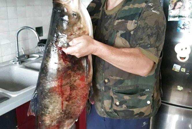 На Тернопільщині чоловік спіймав гігантську рибину