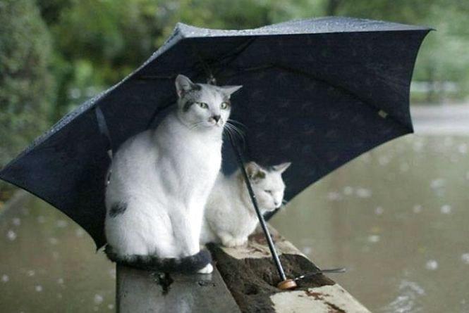 Погода у Тернополі: 29 липня, дощ з грозою, +28°