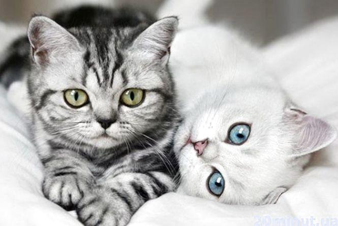 Сьогодні Всесвітній день котів. Похваліться фотографіями своїх мурчиків