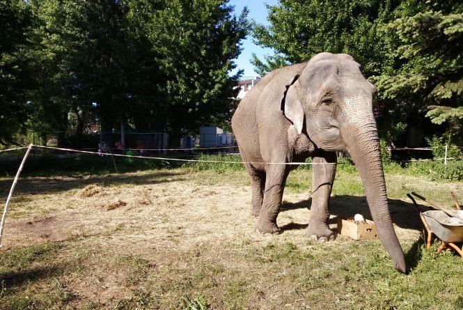 Цирку з дикими тваринами в Тернополі більше  не буде