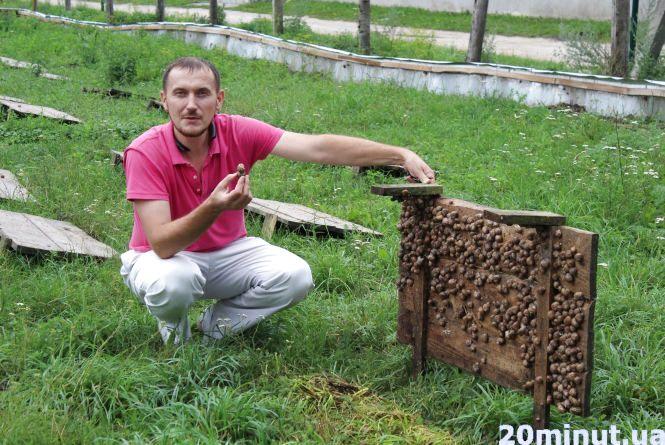 Равликові ферми: новий вид бізнесу на Тернопіллі