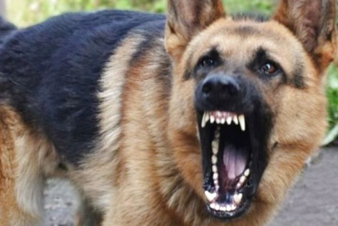 На Тернопільщині домашній собака покусав чоловіка