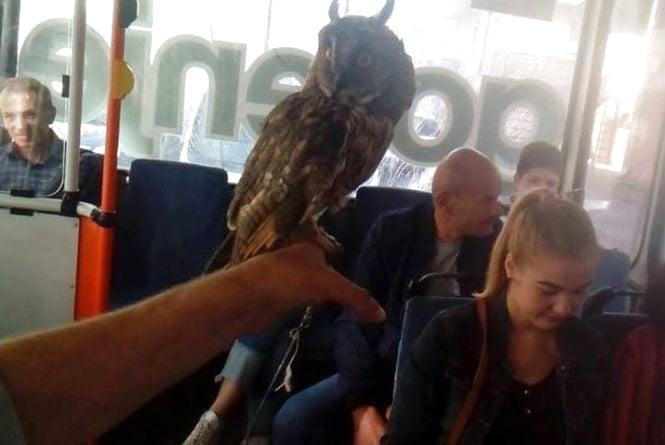 Фото дня: у тернопільському тролейбусі їхала незвичайна пасажирка - сова