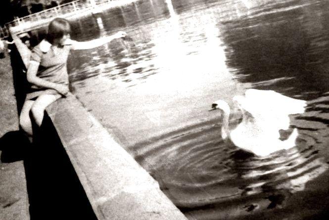 Коли у парку Шевченка жили лебеді