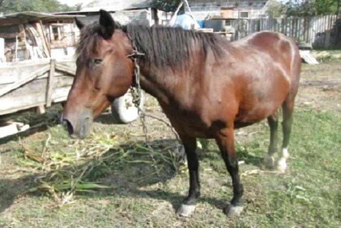 На Тернопільщині коні вбили жінку