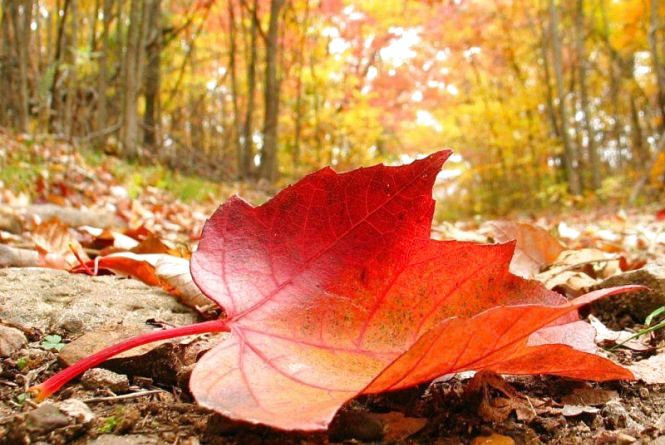 Золота осінь б'є температурні рекорди