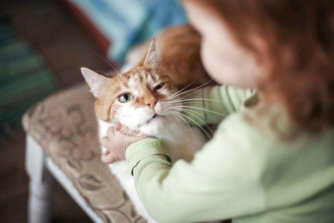 На Тернопільщині четвертокласник познущався над котами на очах у інших дітей