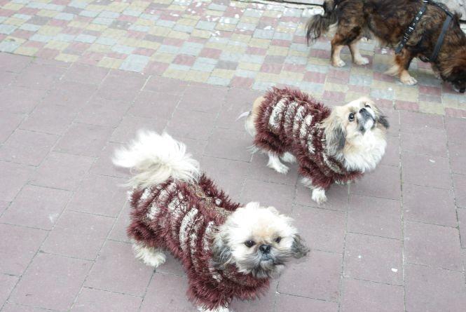 Фото дня: на Набережній собачки у хенд-мейд костюмах