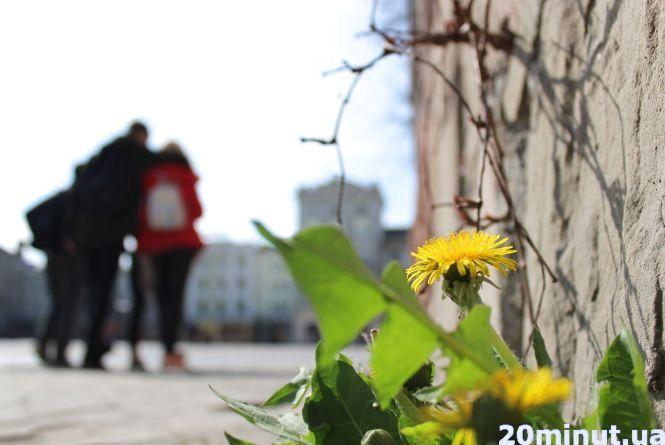 Тернопіль квітне: фоторепортаж із весняного міста