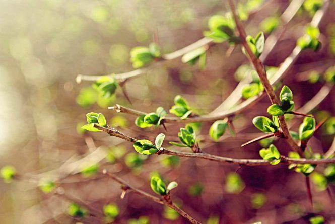 «Хочеться тепла»: тернополяни розповіли, чи чекають на весну
