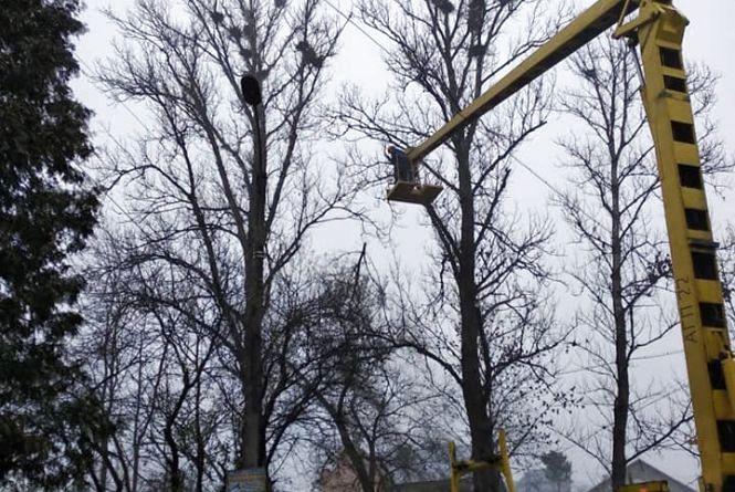 На Тернопільщині двоє комунальників впали із 10-метрової висоти під час обрізання дерев. Один із них помер в лікарні