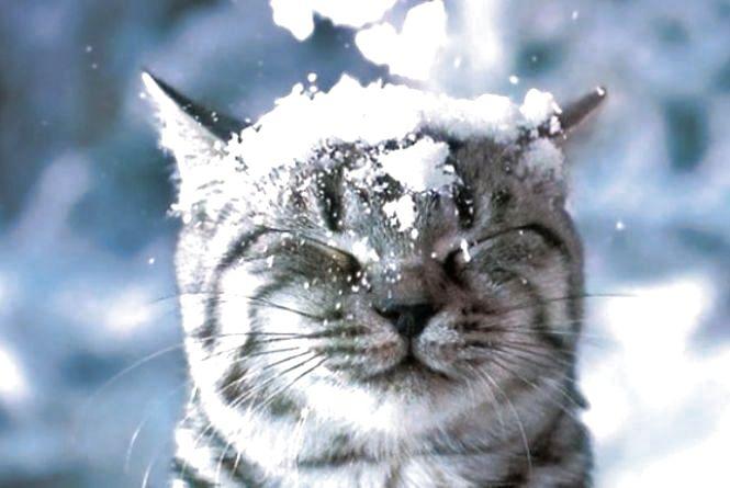 Погода у Тернополі: 26 березня, сніг, +7°